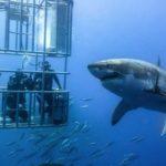 shark-diving-150×150